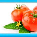 Syngenta AG насіння томатів