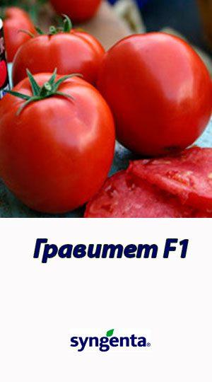 Tomat-GRAVITET-F1-Syngenta-500-shtuk