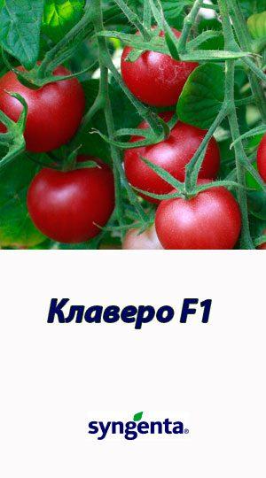 Tomat-KLAVERO-F1-Syngenta-500-shtuk