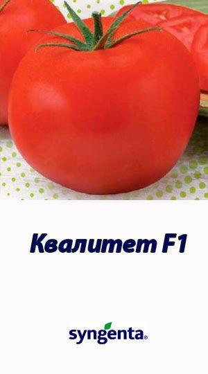Tomat-KVALITET-F1T-97082-Syngenta-500-shtuk