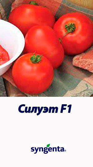 Tomat-SILUET-F1-Syngenta-500-shtuk