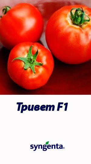 Tomat-TRIVET-F1-Syngenta-500-shtuk